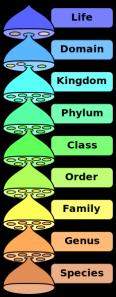 Biological_classification_L_Pengo_vflip.svg