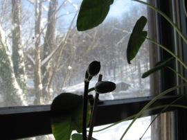 Phalaenopsis 'Baldan's Kalaedoscope'