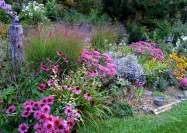 Photo_Jif_September garden (3)