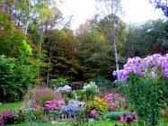 Photo_Jif_September garden (4)