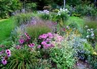 Photo_Jif_September garden