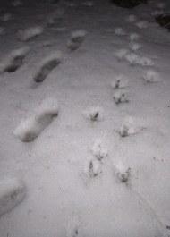 Photo_Jif_Turkey tracks