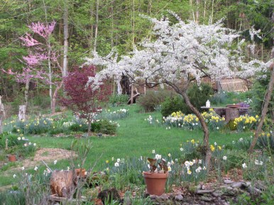 garden IMG_77720_by Jif