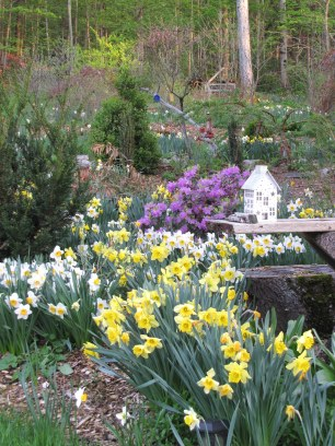 garden IMG_77770_by Jif