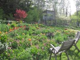 garden IMG_7779