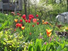 garden IMG_77820_by Jif